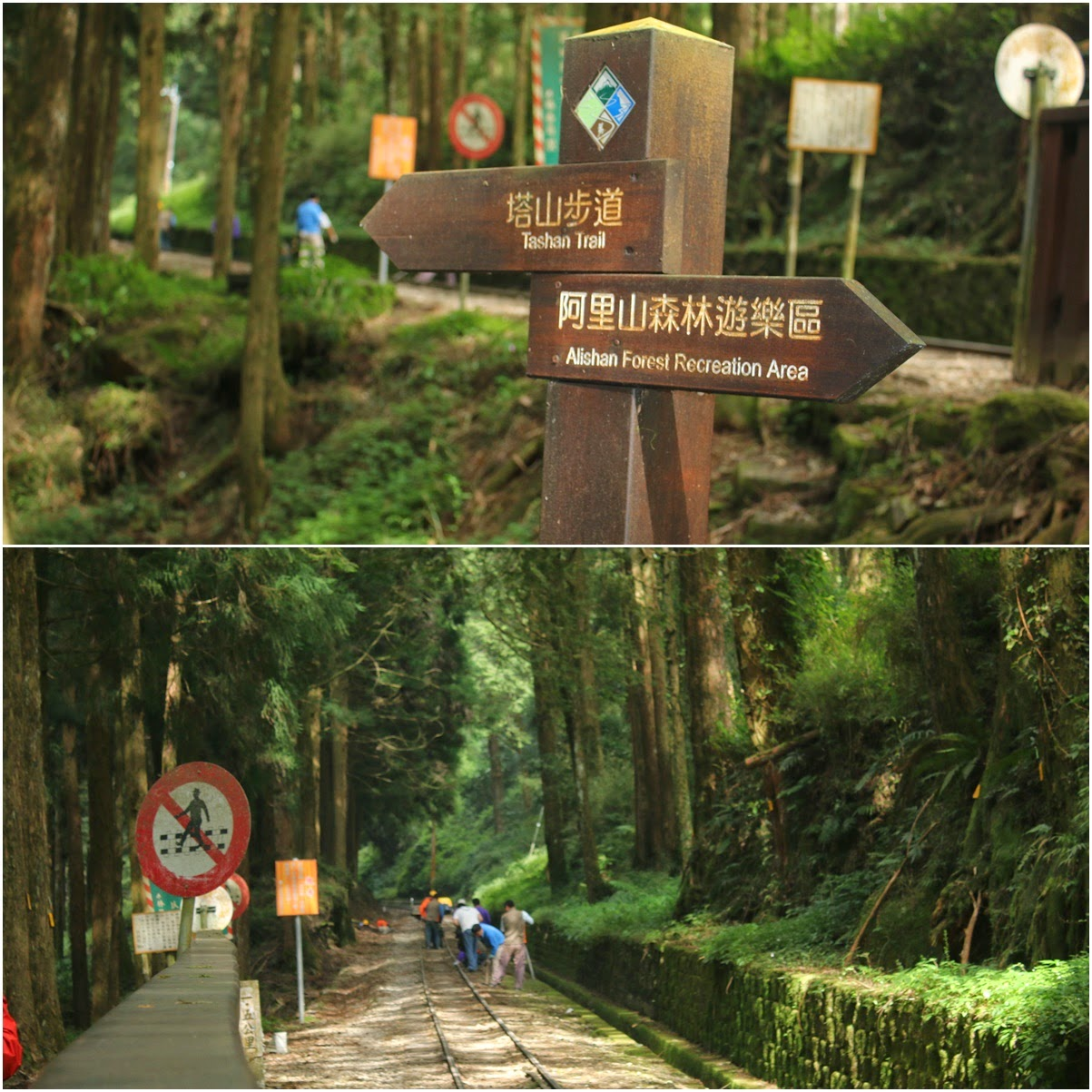 Hiking along the rail trail to Alishan Sister Pond and Alishan Sacred Tree at Alishan National Scenic Area in Chiayi County of Taiwan