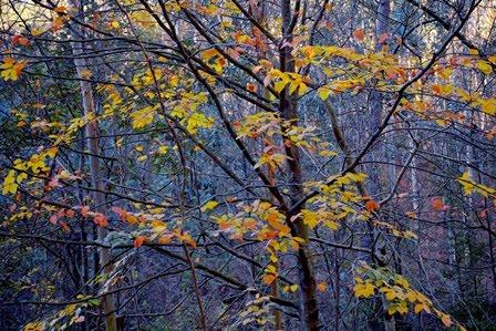 Carcajada de hojas. Blog de poesía