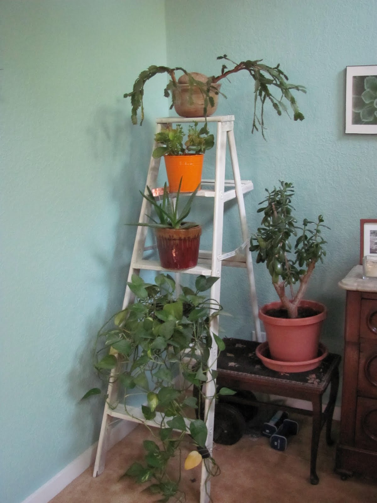 Kitchen come undone ... and redone: Scary old ladder = great plant ...