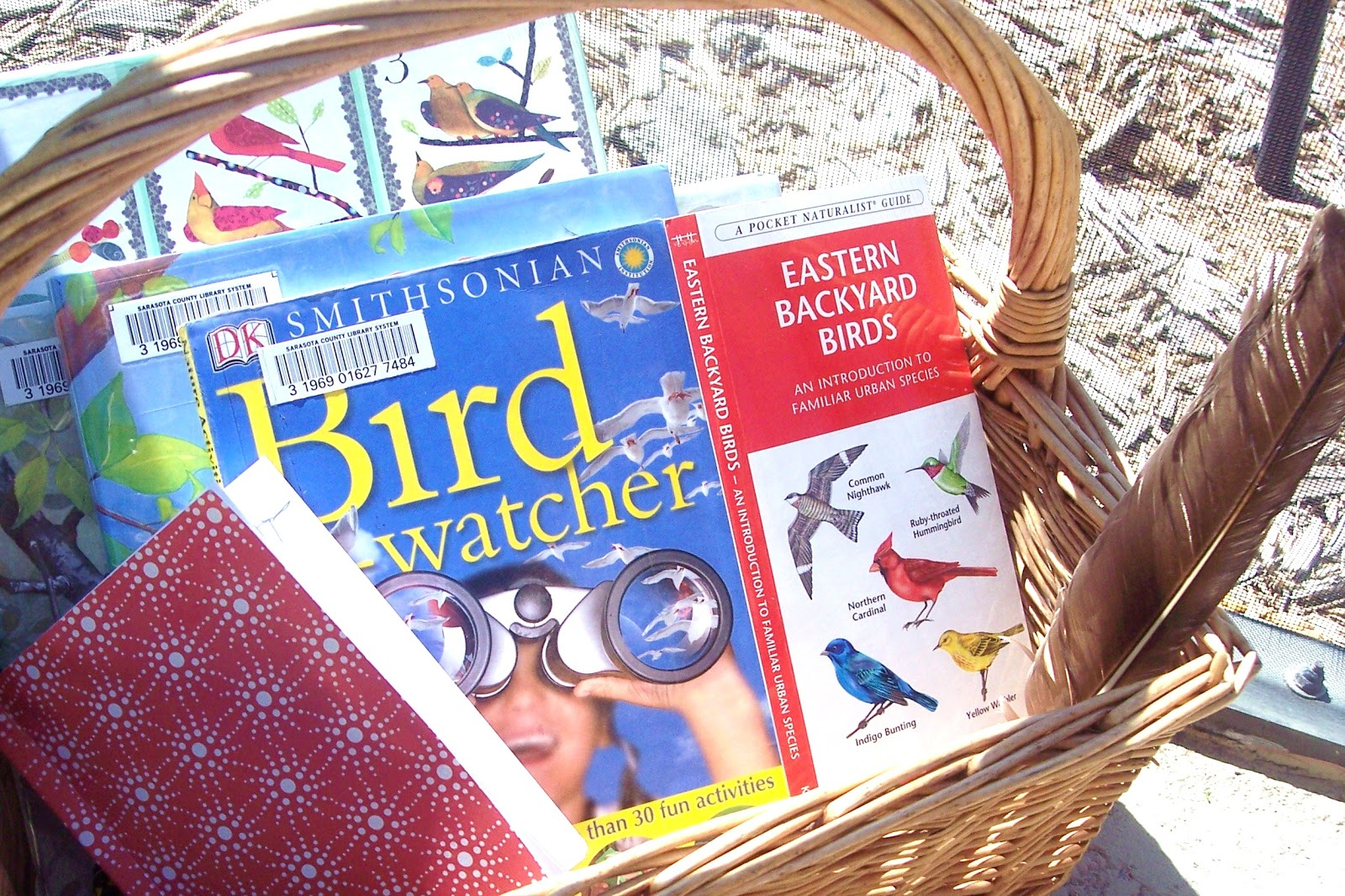 a natural nester kids u0027 nature gift idea 1 bird watching kit
