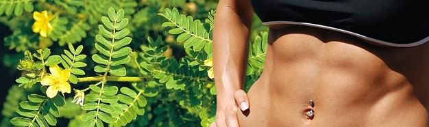 Quais suplementos à base de plantas aumentam a testosterona?