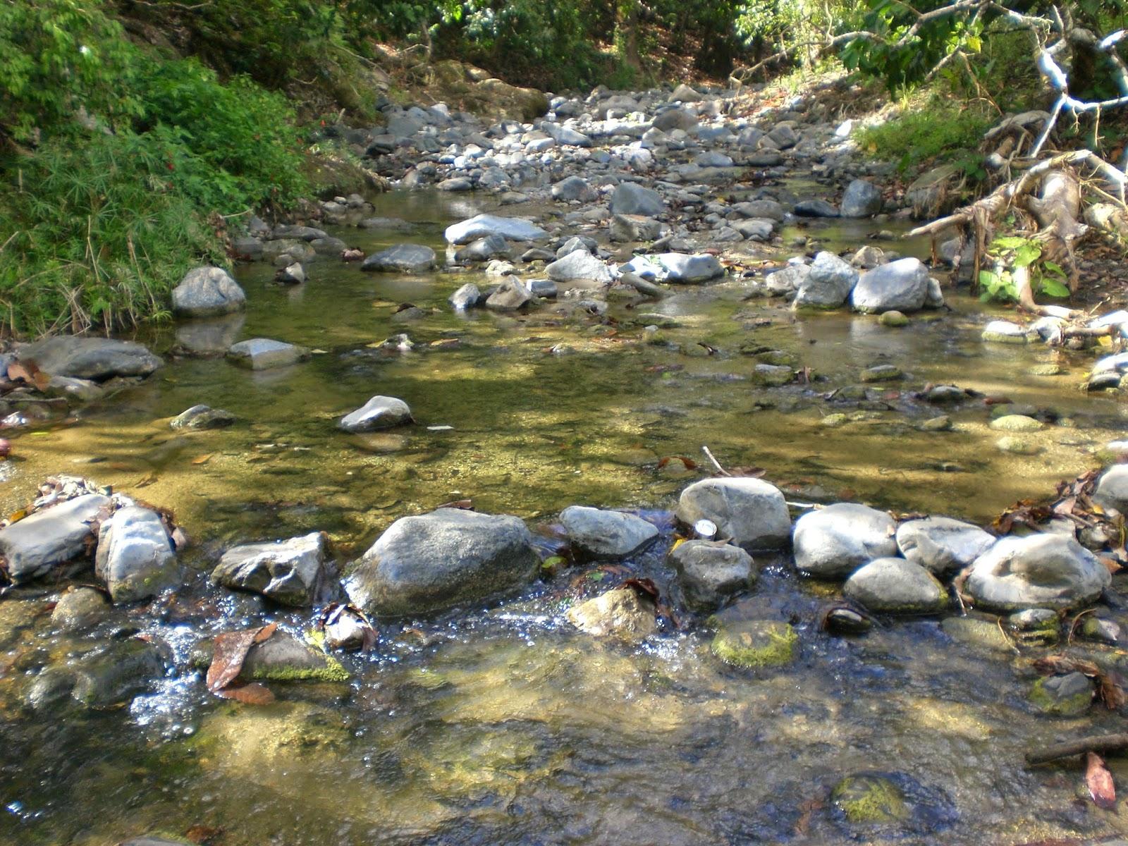 Mi tierra francomacorisana naranjo dulce arriba san fco for Estanques para criar peces