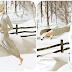 Snow Karate