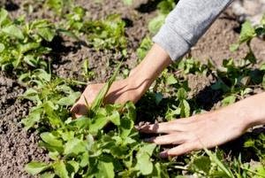 Seasonal Plan to Control Weeds