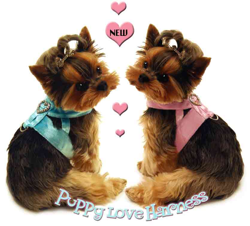Love Puppies high quality wallpaper