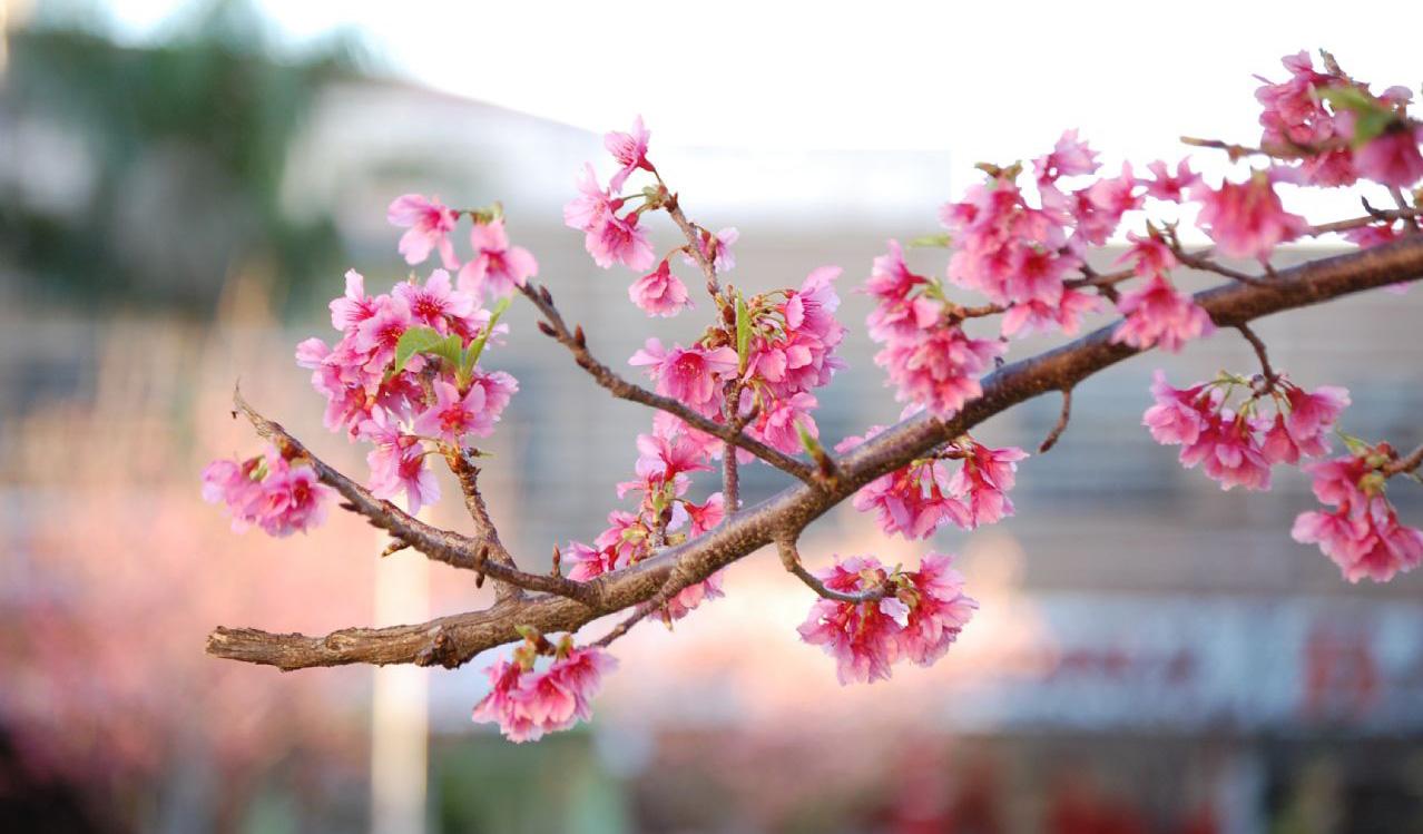 p u00c1tio das flores  flores de inverno