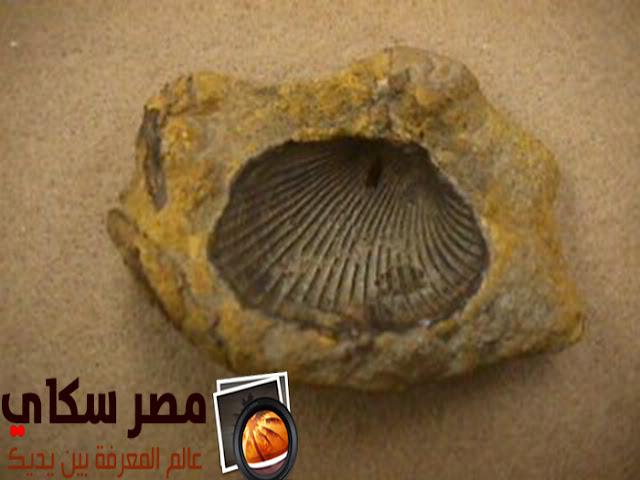 تعرف على حفرية القالب وحفرية الطابع Cast &Mold fossil