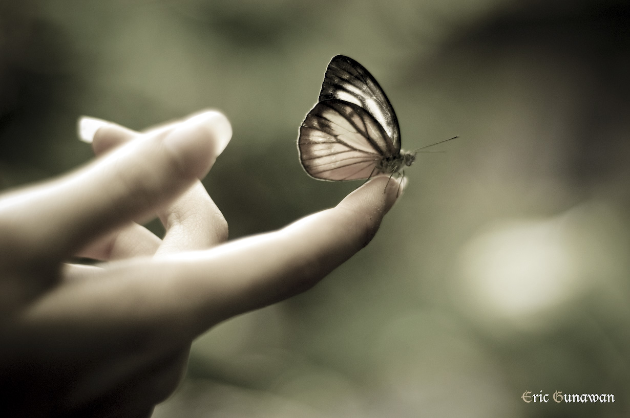 Butterfly flying away - photo#7