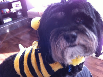 It must BEE Halloween….