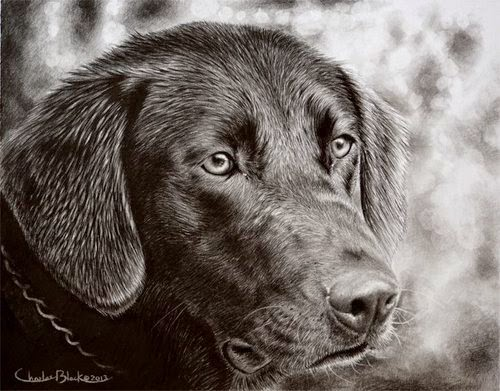 15-Charles-Black-Hyper-Realistic-Pencil-Drawings-of-Dogs-www-designstack-co