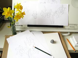 Artist desk with daffodils and drawings of daffodils by Shevaun Doherty