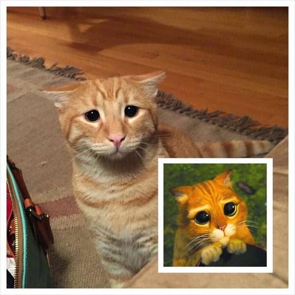 """Кот Марти делает глаза, как """"Кот в сапогах"""""""