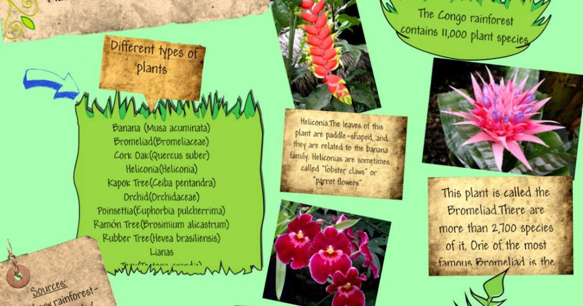 Amazoncom Rainforest Plants amp Animals Mini Bulletin