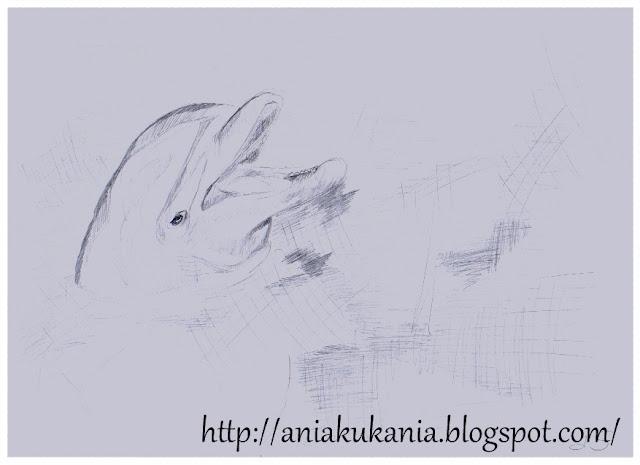 delfin Rysowane ołówkiem