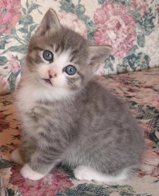 cute kitty allison prior
