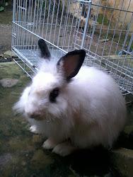 + Bunny Me _ Anggut +