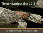 2013 Timber Rattlesnake calendars are now avialable. Don't miss out!!!