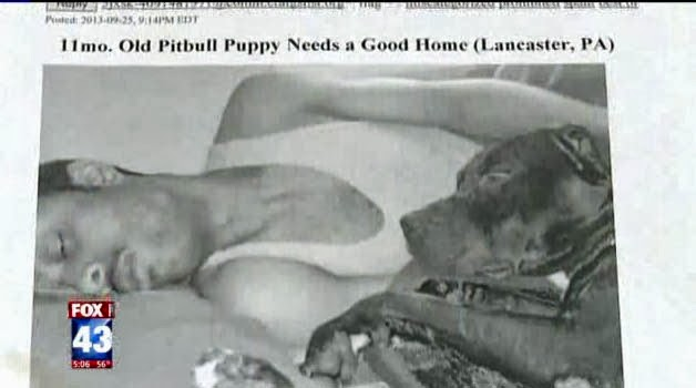 Four legged friends (and enemies): Woman told pit bull for ...