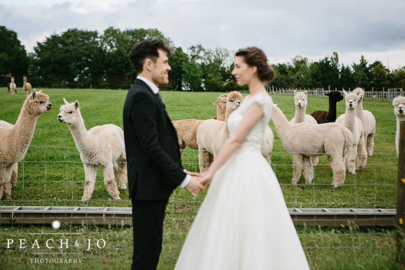 portrait with alpacas