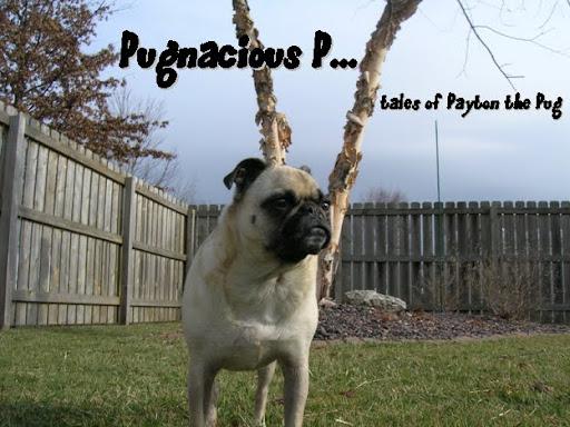 Pugnacious P