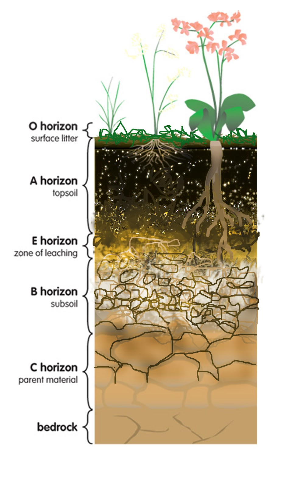 Soil Horizon Layers Diagram : LONG HAIRSTYLES