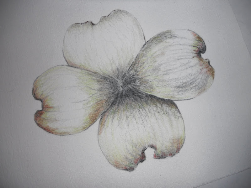 photo of the flower, I use color pencil to form a petal of the flower title=