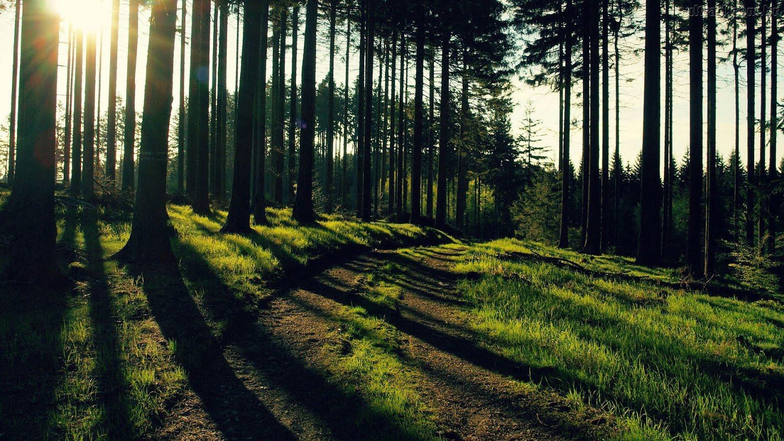 Natureza, Aguardando...