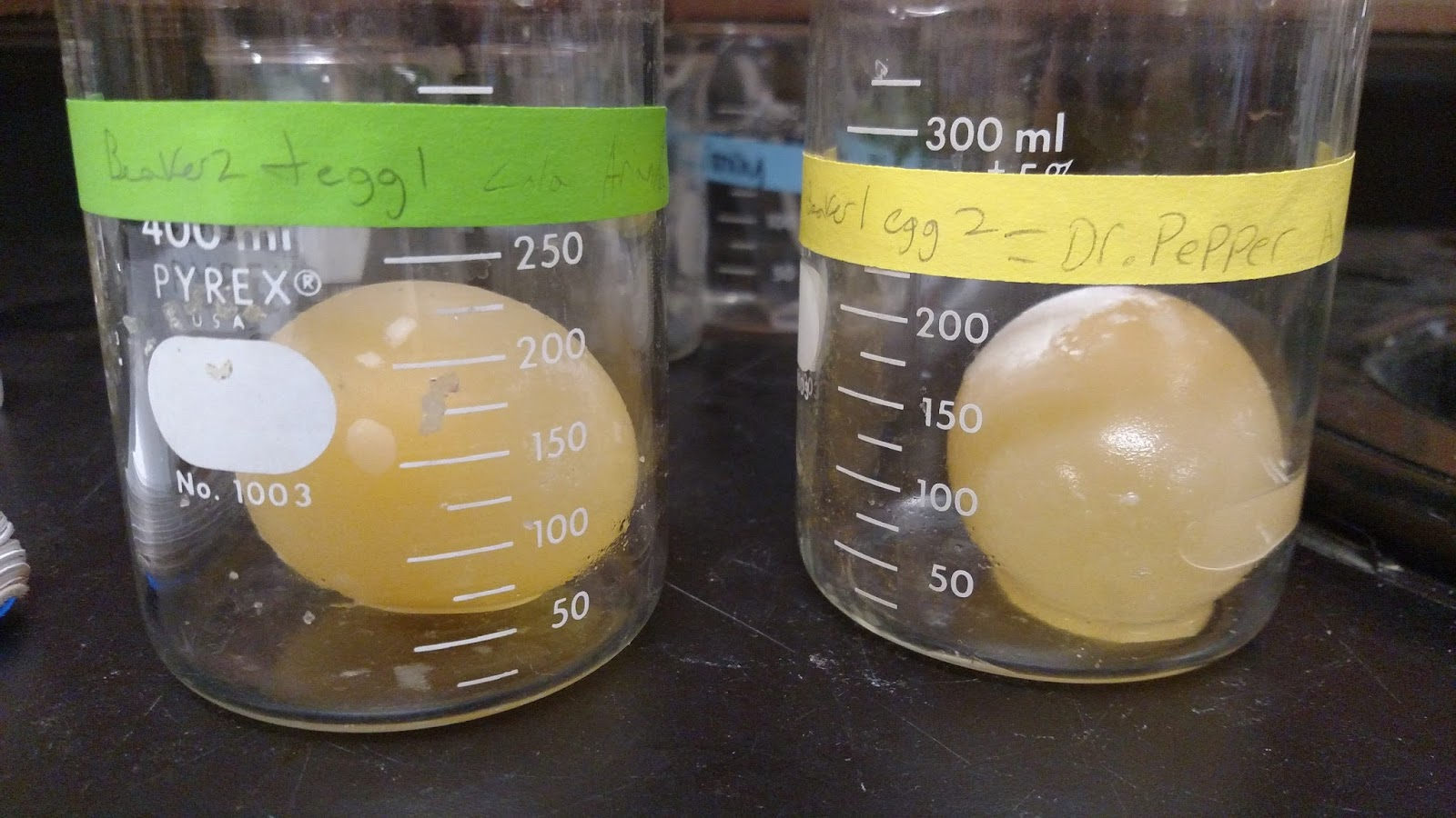 egg osmosis lab report Egg lab: lab report due date _____ 10 pts/day off for labs handed in late this lab will be graded as a test grade please use the following rubric as a checklist when doing your lab.