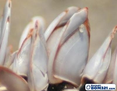 Makhluk Laut Yang Aneh Mempunyai Banyak Sesungut