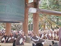 「えーい、ひとーつ」「そーれ」の掛け声を同時に撞木に結ばれた子綱を僧侶16人が一斉に引いた。