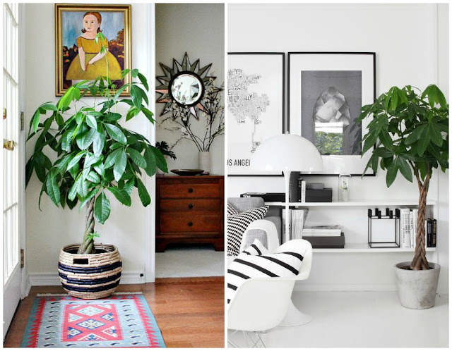 Decoraci n f cil 10 mejores plantas de interior Plantas tropicales interior