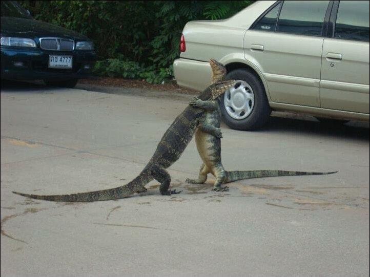 cute-animal-hugging-pictures-002.jpg