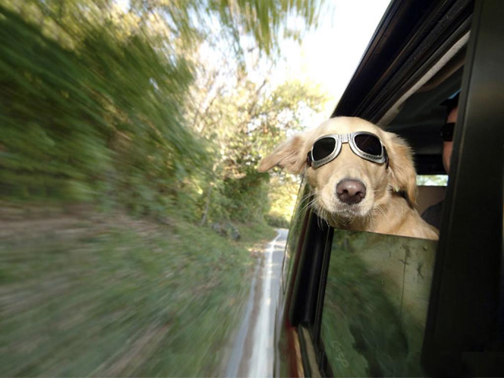 http://3.bp.blogspot.com/-haKEeEtfC3Q/Tgna6nlJ0jI/AAAAAAAAI3M/BIfeeQBqnX8/s1600/dog-wallpaper-11-706.jpg