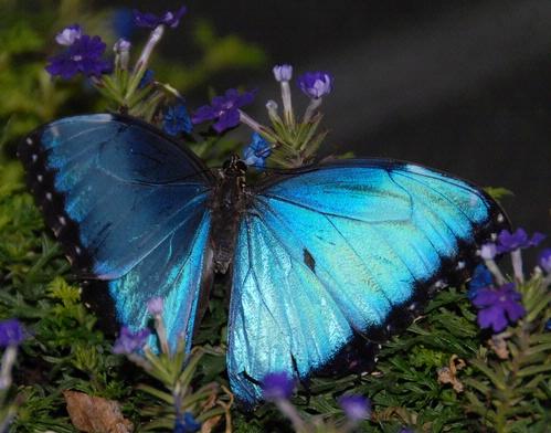petaloudes-πεταλούδες=