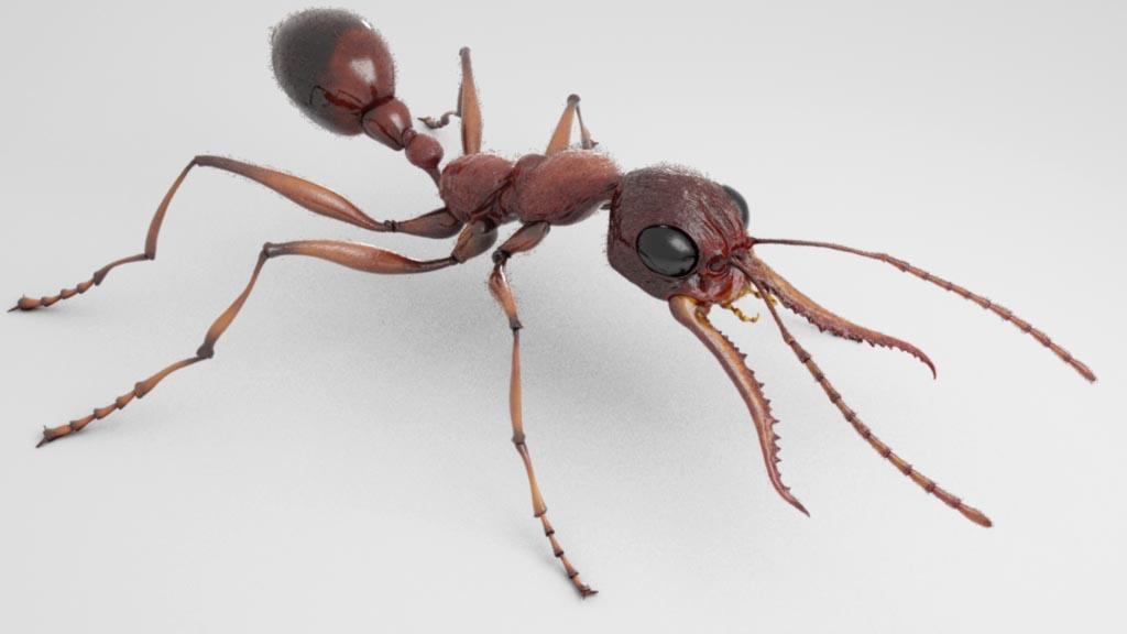 Eric Keller\'s Portfolio: Bulldog Ant