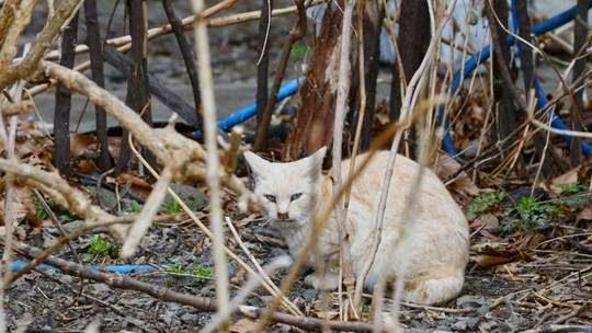 animals in fukushima