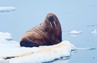 Gumtree ad roommate to dress as walrus
