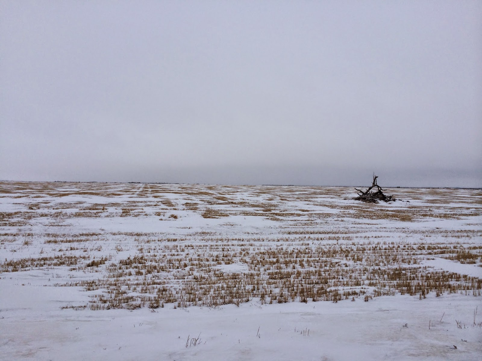 A Prairie Winter View