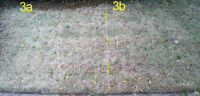 Lawn 3a and 3b one week after application of BurnOut II and Nature's Avenger