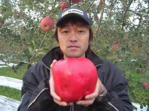 Epal Paling Besar Di Dunia