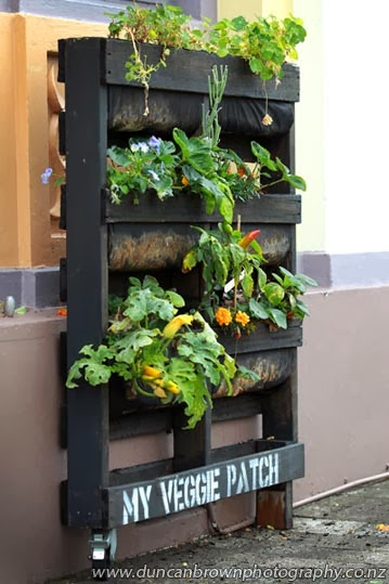 The coolest use I've ever seen for a recycled pallet: My Veggie Patch, seen at Gather, a retailer in Tennyson St, Napier - and there was me burning them for firewood.... photograph