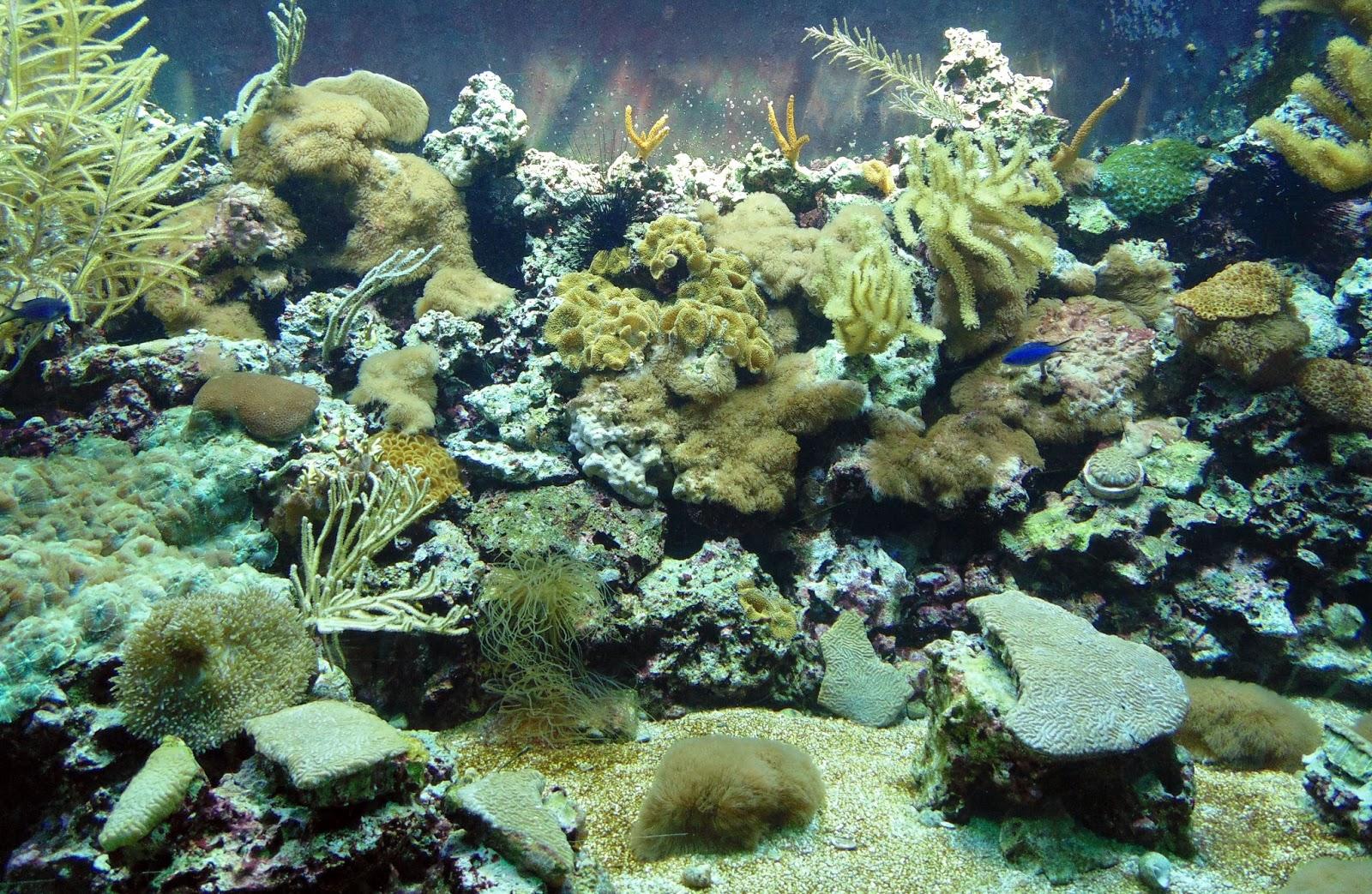 sponges aquarium