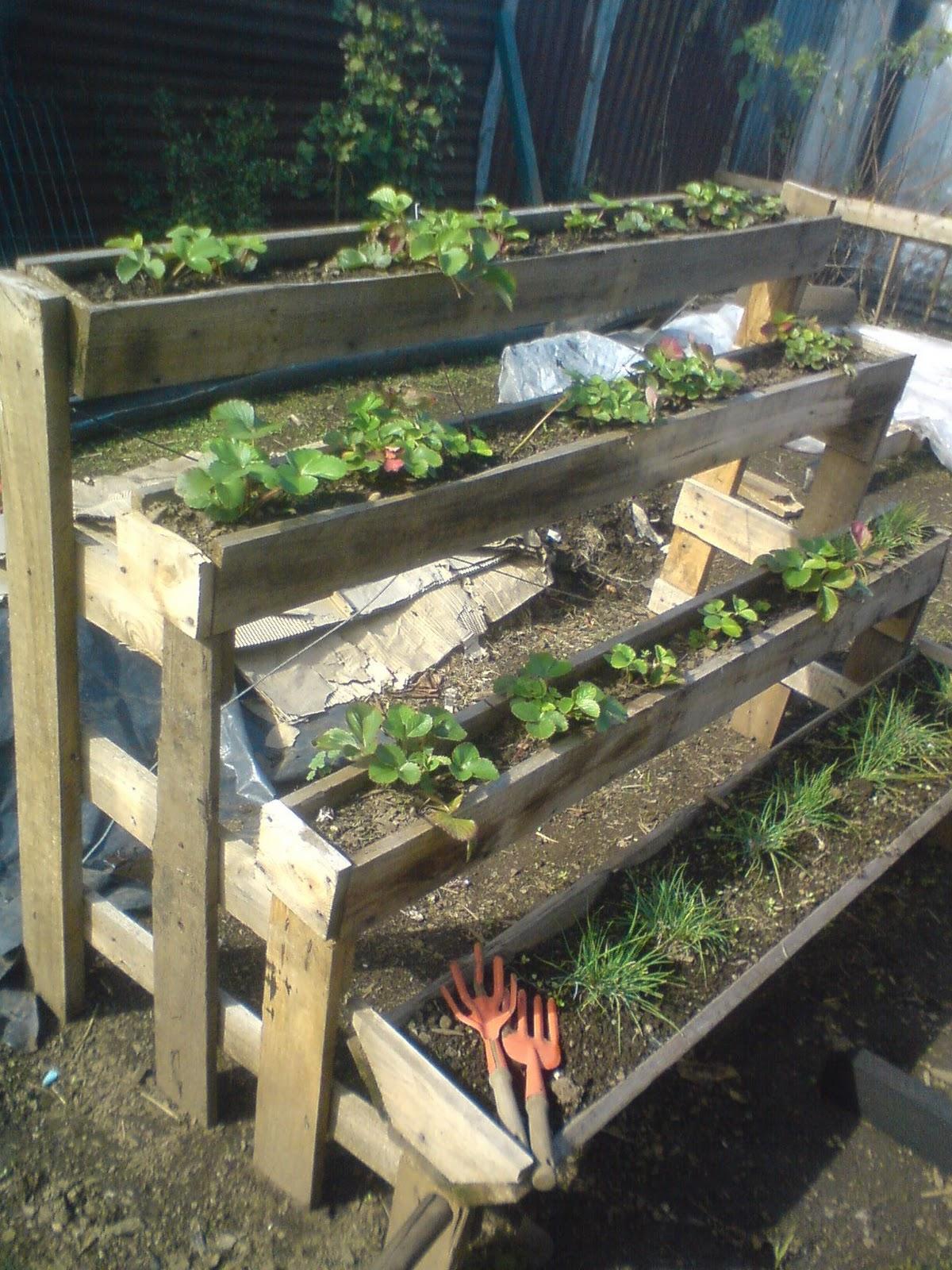 Aficion por crear construccion de invernadero casero con for Construccion de viveros e invernaderos