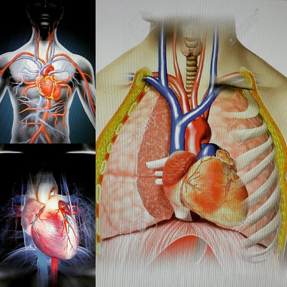 Indagando en la anatomía cardíaca!: septiembre 2015