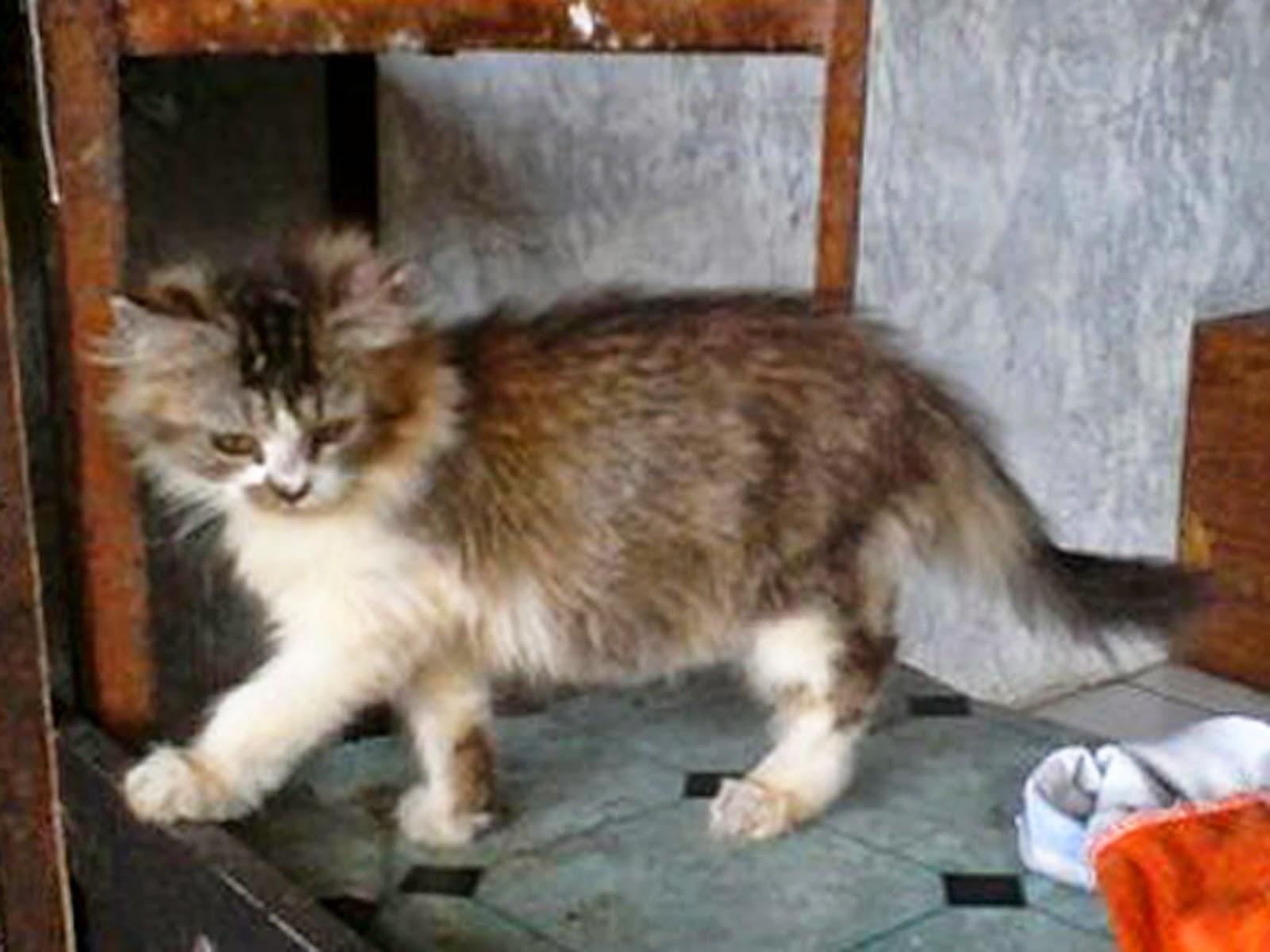 Foto Anak Kucing Segitu Petshop