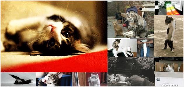 アルティメットに癒されるネコのGIMアニメ集