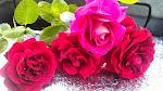 Corté unas rosas