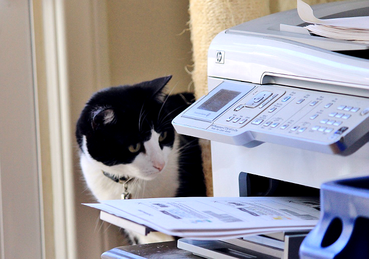 Cats and printers