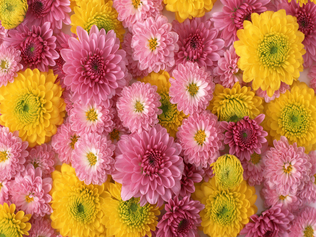 flowers for flower lovers.: Flowers wallpapers HD desktop Beautiful