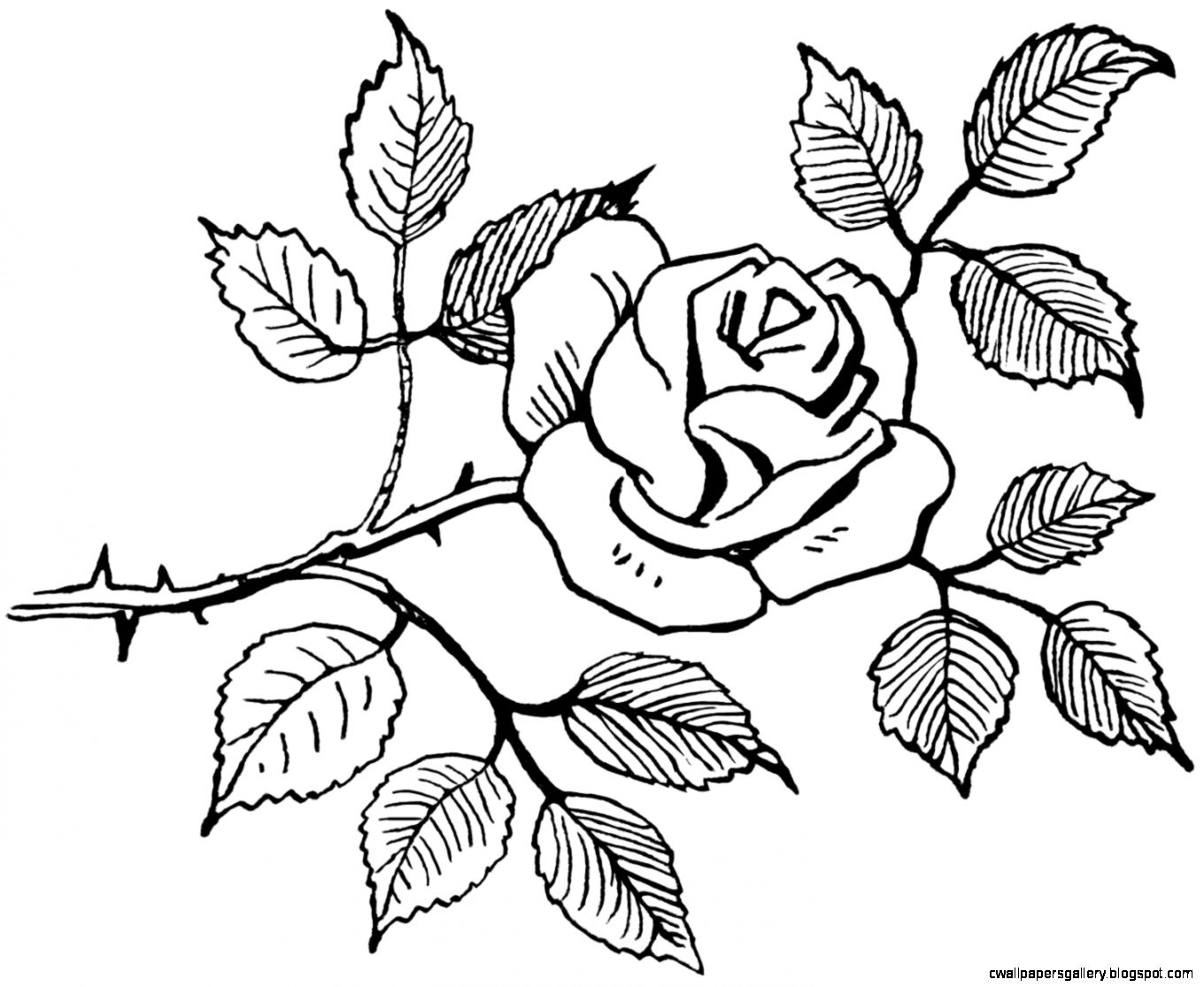 Easy Rose Drawings In Black And White  Bouquet Idea